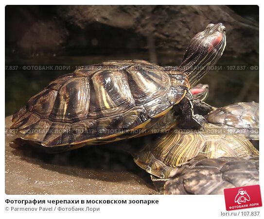 Фотография черепахи в московском зоопарке, фото № 107837, снято 8 ноября 2004 г. (c) Parmenov Pavel / Фотобанк Лори