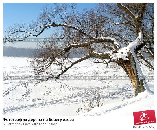 Фотография дерева на берегу озера, фото № 99517, снято 12 февраля 2007 г. (c) Parmenov Pavel / Фотобанк Лори