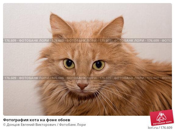 Фотография кота на фоне обоев, фото № 176609, снято 10 января 2008 г. (c) Донцов Евгений Викторович / Фотобанк Лори
