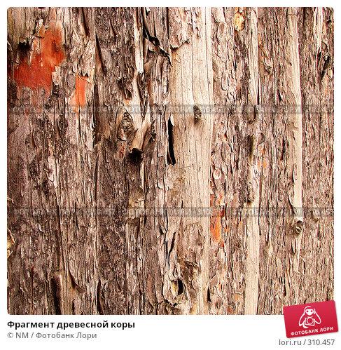 Купить «Фрагмент древесной коры», фото № 310457, снято 9 февраля 2008 г. (c) NM / Фотобанк Лори