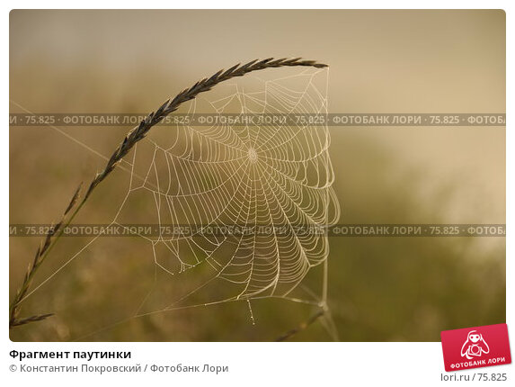 Купить «Фрагмент паутинки», фото № 75825, снято 24 августа 2007 г. (c) Константин Покровский / Фотобанк Лори
