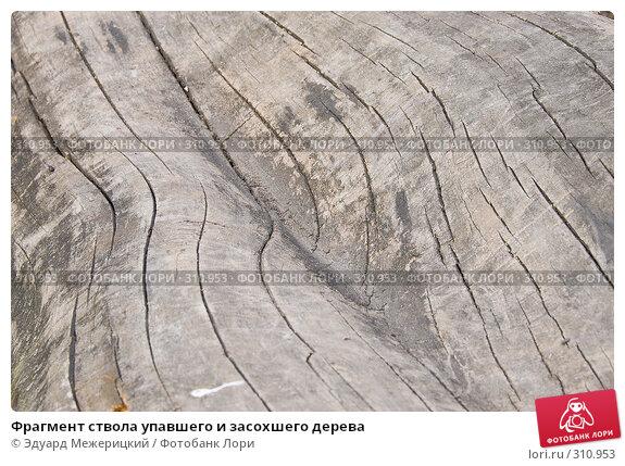 Фрагмент ствола упавшего и засохшего дерева, фото № 310953, снято 12 мая 2008 г. (c) Эдуард Межерицкий / Фотобанк Лори