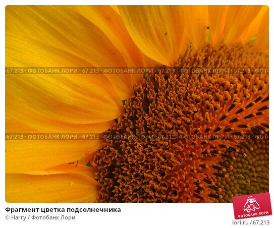 Фрагмент цветка подсолнечника, фото № 67213, снято 30 июля 2004 г. (c) Harry / Фотобанк Лори