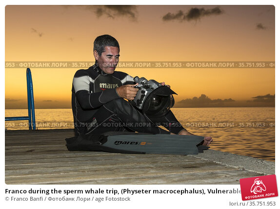 Franco during the sperm whale trip, (Physeter macrocephalus), Vulnerable... (2015 год). Редакционное фото, фотограф Franco Banfi / age Fotostock / Фотобанк Лори