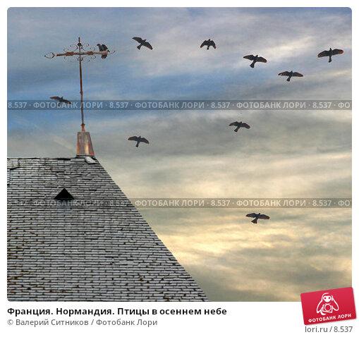Франция. Нормандия. Птицы в осеннем небе, фото № 8537, снято 24 октября 2005 г. (c) Валерий Ситников / Фотобанк Лори