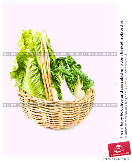Fresh  baby bok choy and cos salad in ratten basket isolated on . Стоковое фото, фотограф Ammar Mas-oo-di / PantherMedia / Фотобанк Лори