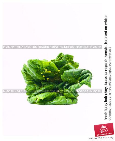 Fresh baby bok choy, Brassica rapa chinensis,  isolated on white. Стоковое фото, фотограф Ammar Mas-oo-di / PantherMedia / Фотобанк Лори