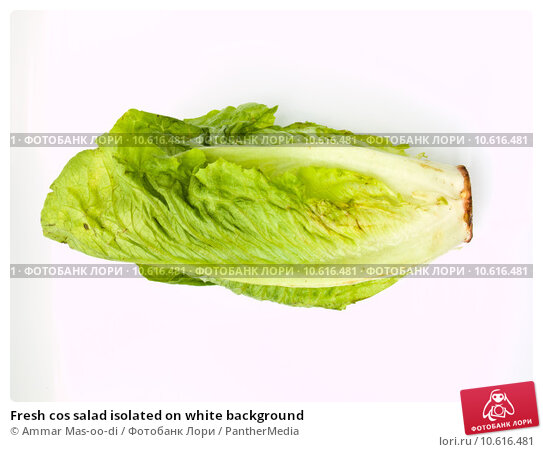 Fresh cos salad isolated on white background. Стоковое фото, фотограф Ammar Mas-oo-di / PantherMedia / Фотобанк Лори