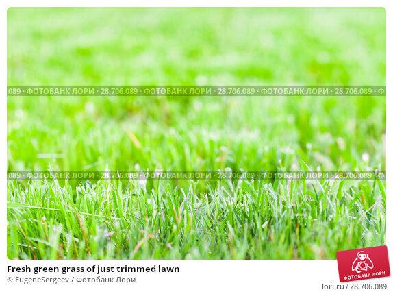 Купить «Fresh green grass of just trimmed lawn», фото № 28706089, снято 23 июня 2018 г. (c) EugeneSergeev / Фотобанк Лори