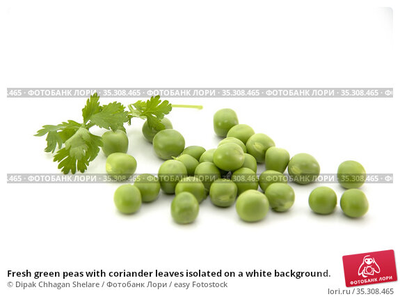Fresh green peas with coriander leaves isolated on a white background. Стоковое фото, фотограф Dipak Chhagan Shelare / easy Fotostock / Фотобанк Лори