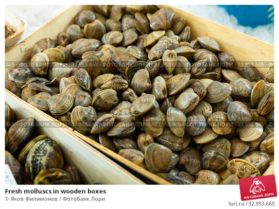 Fresh molluscs in wooden boxes. Стоковое фото, фотограф Яков Филимонов / Фотобанк Лори