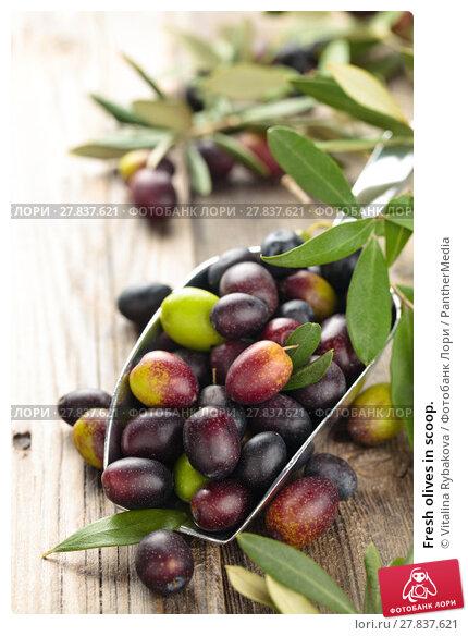 Купить «Fresh olives in scoop.», фото № 27837621, снято 22 февраля 2018 г. (c) PantherMedia / Фотобанк Лори