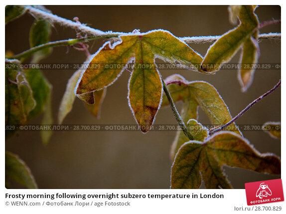 Купить «Frosty morning following overnight subzero temperature in London Featuring: Atmosphere Where: London, United Kingdom When: 29 Dec 2016 Credit: WENN.com», фото № 28700829, снято 29 декабря 2016 г. (c) age Fotostock / Фотобанк Лори