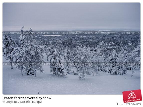 Купить «Frozen forest covered by snow», фото № 29384805, снято 10 января 2017 г. (c) Liseykina / Фотобанк Лори