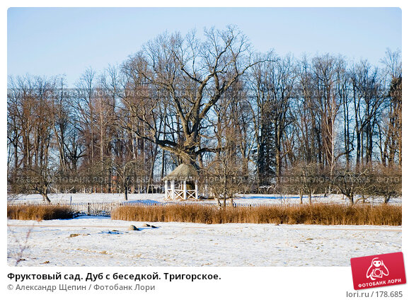 Фруктовый сад. Дуб с беседкой. Тригорское., эксклюзивное фото № 178685, снято 5 января 2008 г. (c) Александр Щепин / Фотобанк Лори