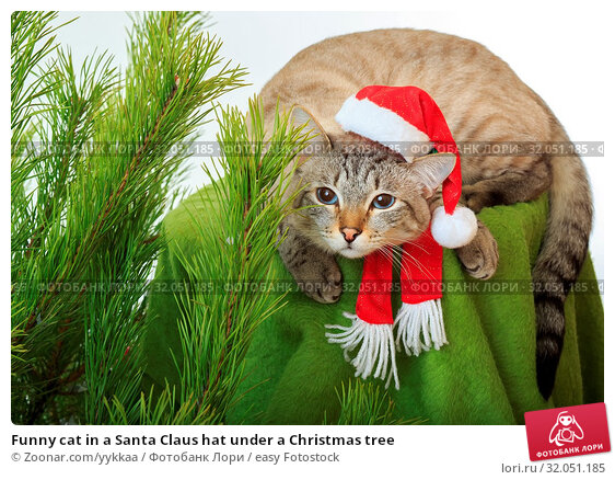 Funny cat in a Santa Claus hat under a Christmas tree. Стоковое фото, фотограф Zoonar.com/yykkaa / easy Fotostock / Фотобанк Лори