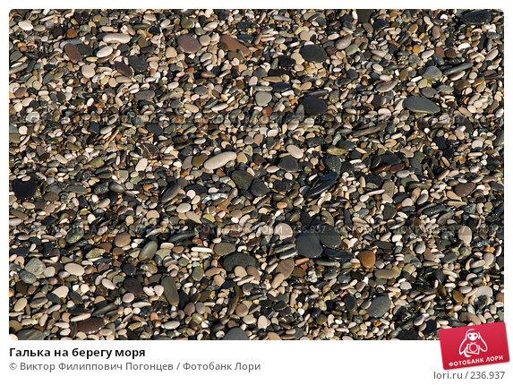 Галька на берегу моря, фото № 236937, снято 30 августа 2006 г. (c) Виктор Филиппович Погонцев / Фотобанк Лори
