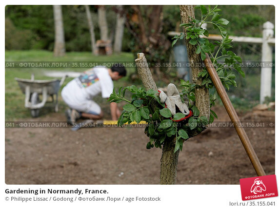 Gardening in Normandy, France. Стоковое фото, фотограф Philippe Lissac / Godong / age Fotostock / Фотобанк Лори