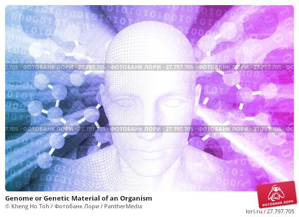 Купить «Genome or Genetic Material of an Organism», фото № 27797705, снято 24 февраля 2019 г. (c) PantherMedia / Фотобанк Лори
