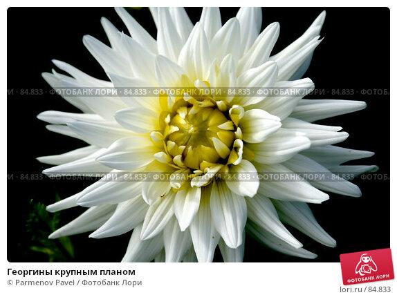 Георгины крупным планом, фото № 84833, снято 11 сентября 2007 г. (c) Parmenov Pavel / Фотобанк Лори