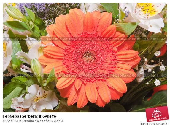 Купить «Гербера (Gerbera) в букете», эксклюзивное фото № 3640013, снято 4 мая 2010 г. (c) Алёшина Оксана / Фотобанк Лори