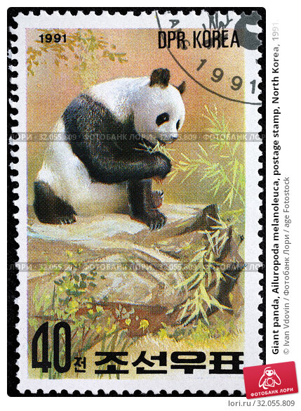 Giant panda, Ailuropoda melanoleuca, postage stamp, North Korea, 1991. (2014 год). Редакционное фото, фотограф Ivan Vdovin / age Fotostock / Фотобанк Лори