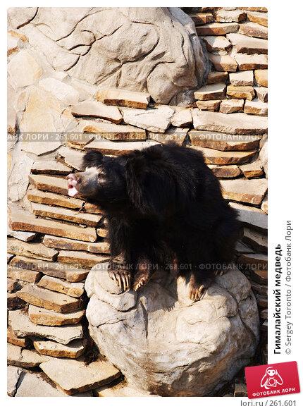 Купить «Гималайский медведь», фото № 261601, снято 12 апреля 2008 г. (c) Sergey Toronto / Фотобанк Лори