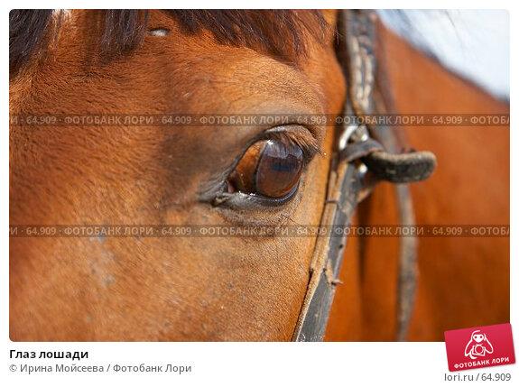 Глаз лошади, эксклюзивное фото № 64909, снято 17 июня 2007 г. (c) Ирина Мойсеева / Фотобанк Лори
