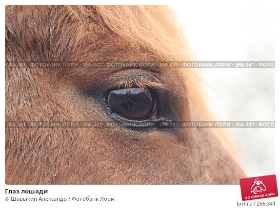 Глаз лошади, фото № 266341, снято 14 апреля 2008 г. (c) Шавыкин Александр / Фотобанк Лори