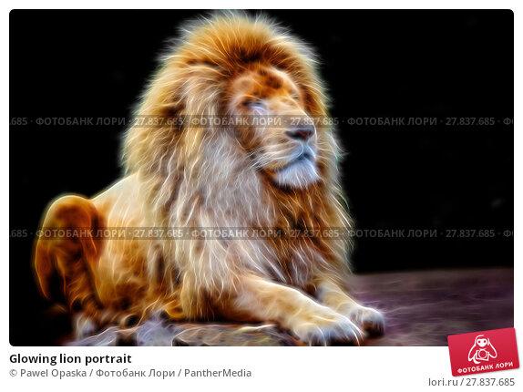 Купить «Glowing lion portrait», фото № 27837685, снято 21 февраля 2018 г. (c) PantherMedia / Фотобанк Лори