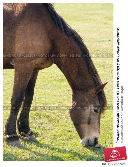 Купить «Гнедая лошадь пасется на зеленом лугу посреди деревни», фото № 265505, снято 20 апреля 2008 г. (c) Дмитрий Боков / Фотобанк Лори