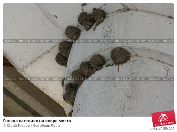 Гнезда ласточек на опоре моста, фото № 159209, снято 24 апреля 2017 г. (c) Юрий Егоров / Фотобанк Лори