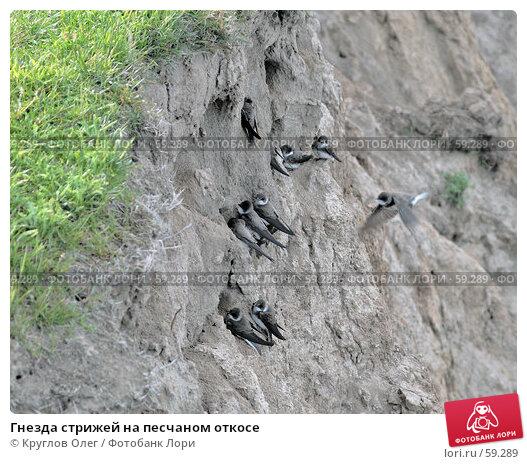 Гнезда стрижей на песчаном откосе, фото № 59289, снято 4 июня 2007 г. (c) Круглов Олег / Фотобанк Лори