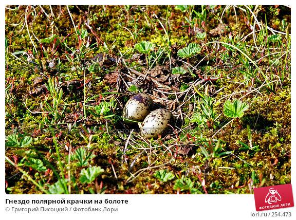 Купить «Гнездо полярной крачки на болоте», фото № 254473, снято 23 апреля 2018 г. (c) Григорий Писоцкий / Фотобанк Лори