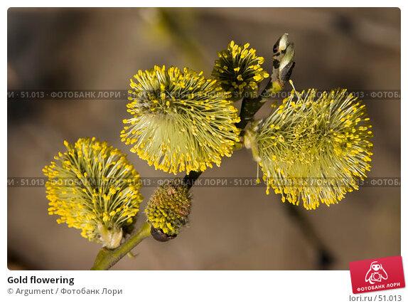 Gold flowering, фото № 51013, снято 27 апреля 2006 г. (c) Argument / Фотобанк Лори