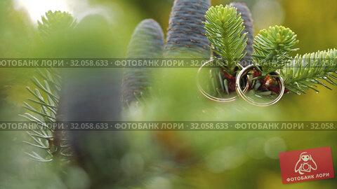 Gold Wedding Rings on a pine or fir-tree macro closeup shoot diamon Jewellery. Стоковое видео, видеограф Aleksejs Bergmanis / Фотобанк Лори