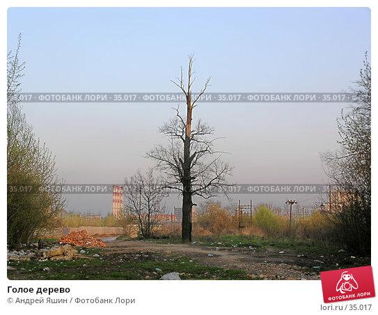 Голое дерево, фото № 35017, снято 3 мая 2005 г. (c) Андрей Яшин / Фотобанк Лори