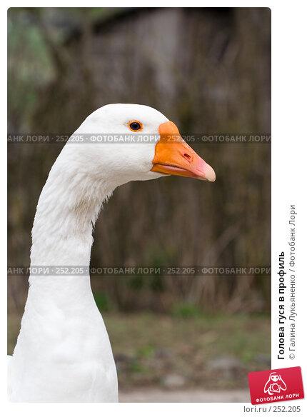 Купить «Голова гуся в профиль», фото № 252205, снято 13 апреля 2008 г. (c) Галина Лукьяненко / Фотобанк Лори