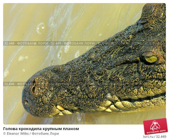 Голова крокодила крупным планом, фото № 32449, снято 21 июня 2006 г. (c) Eleanor Wilks / Фотобанк Лори