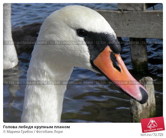 Голова лебедя крупным планом, фото № 72725, снято 4 января 2005 г. (c) Марина Грибок / Фотобанк Лори