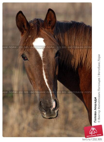 Голова лошади, фото № 232305, снято 6 ноября 2004 г. (c) Виктор Филиппович Погонцев / Фотобанк Лори