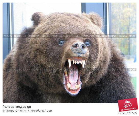 Голова медведя, фото № 78585, снято 1 октября 2005 г. (c) Игорь Олюнин / Фотобанк Лори