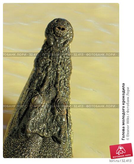 Голова молодого крокодила, фото № 32413, снято 21 июня 2006 г. (c) Eleanor Wilks / Фотобанк Лори