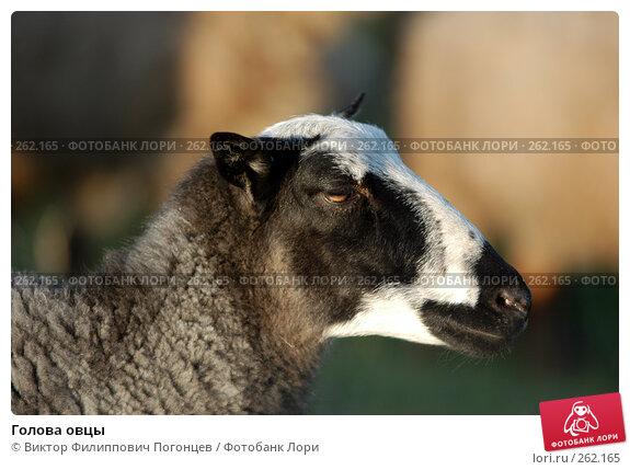 Голова овцы, фото № 262165, снято 27 апреля 2005 г. (c) Виктор Филиппович Погонцев / Фотобанк Лори