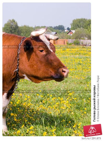 Голова рыжей коровы, фото № 291873, снято 19 мая 2008 г. (c) Елена Блохина / Фотобанк Лори