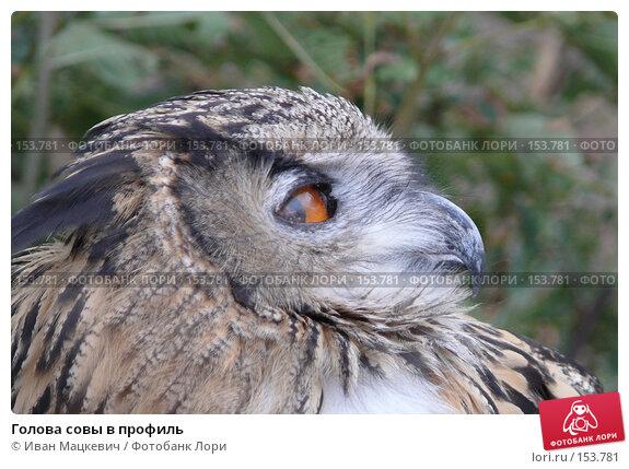 Голова совы в профиль, фото № 153781, снято 23 сентября 2007 г. (c) Иван Мацкевич / Фотобанк Лори