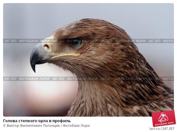 Голова степного орла в профиль, фото № 247357, снято 3 апреля 2005 г. (c) Виктор Филиппович Погонцев / Фотобанк Лори