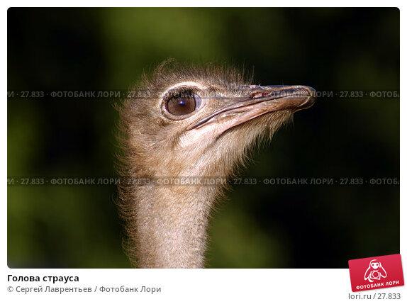 Купить «Голова страуса», фото № 27833, снято 23 июля 2006 г. (c) Сергей Лаврентьев / Фотобанк Лори