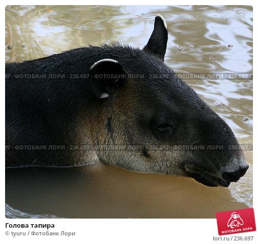 Голова тапира, фото № 236697, снято 29 марта 2008 г. (c) tyuru / Фотобанк Лори