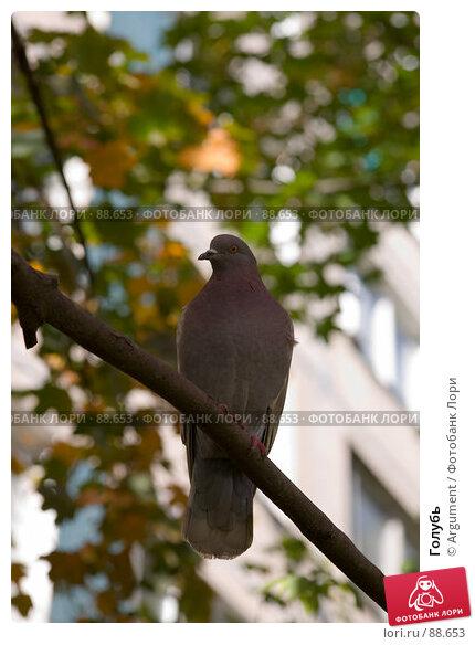 Голубь, фото № 88653, снято 20 сентября 2007 г. (c) Argument / Фотобанк Лори